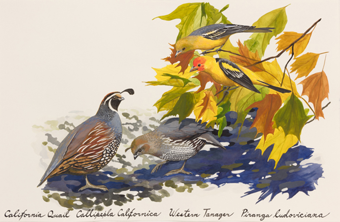 QUAIL TANAGERS 22x30